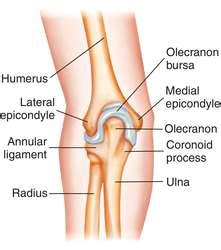 Elbow | definition of elbow by Medical dictionary