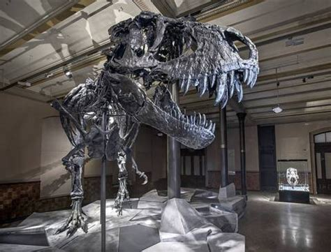First REAL Tyrannosaurus rex to go on display in Europe