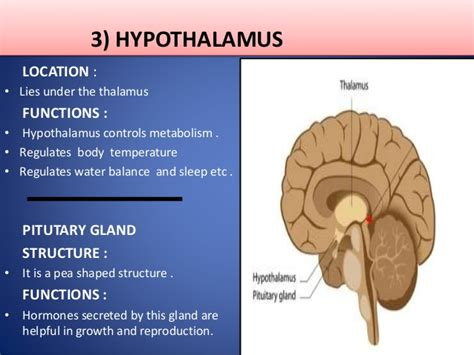 The nervous system, Its Types, The Human Brain, Functions