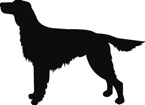 Red setter clipart - Clipground